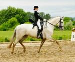 standup-historique-2014-cheval